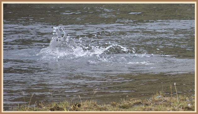 Glaðbeittur fiskur